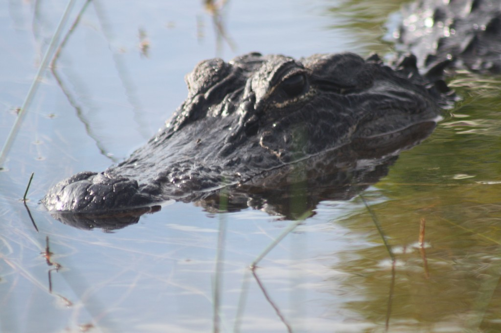 airboat ride discounts