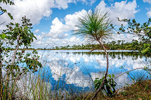 Everglades swamp tour