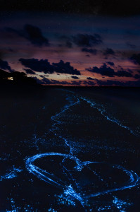 Heart on the beach from bioluminescent algae Noctiluca Scintilla