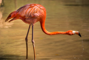 pink flamingo stretched neck