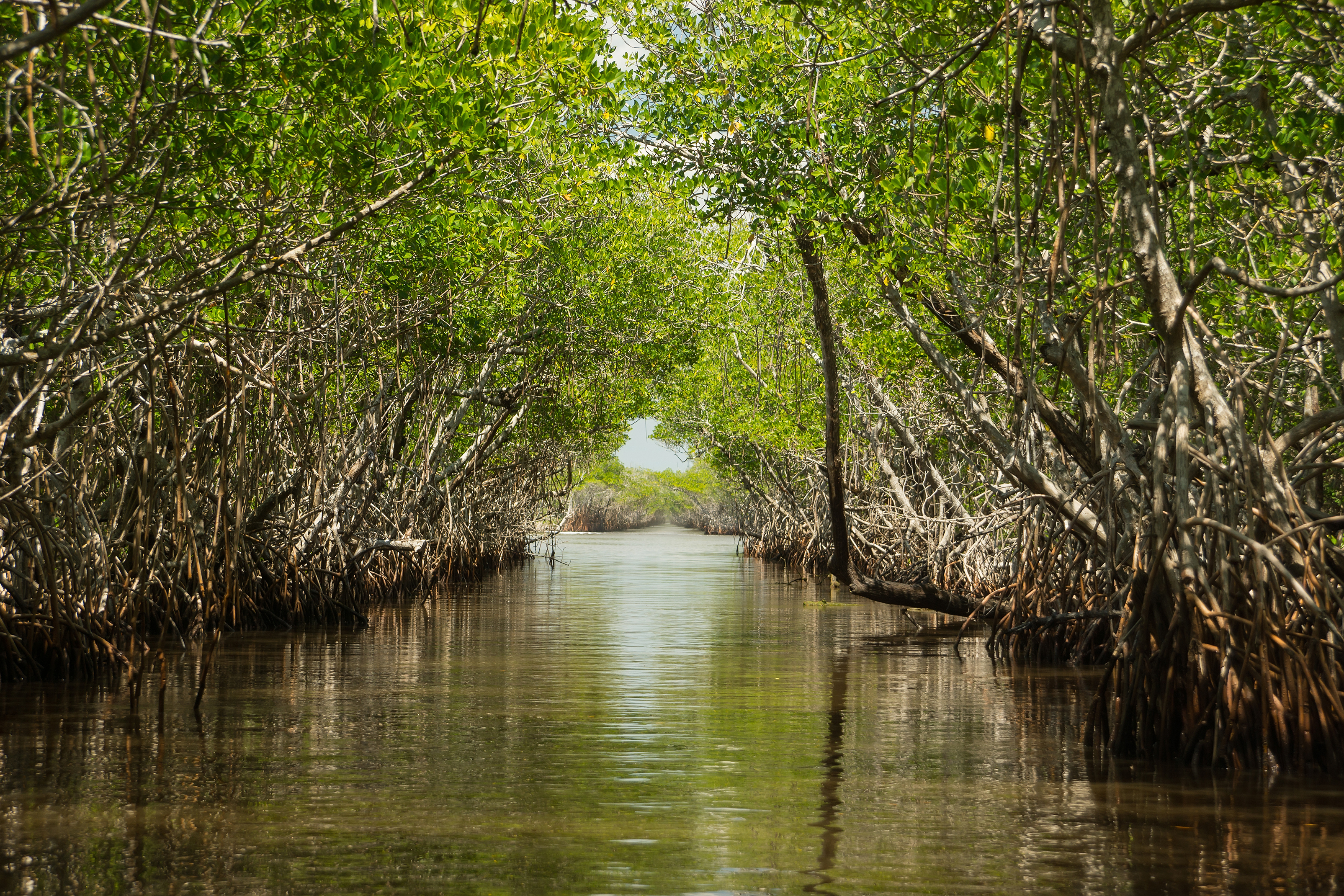 The Mangroves Of The Everglades Captain Mitch S