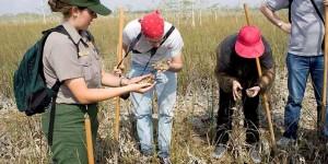 activities in the everglades