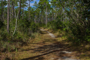 long pine key trail